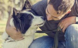 Animais podem auxiliar em tratamentos de saúde