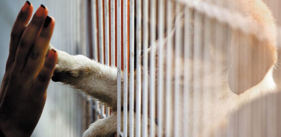 Adoção de cães pode favorecer a saúde familiar