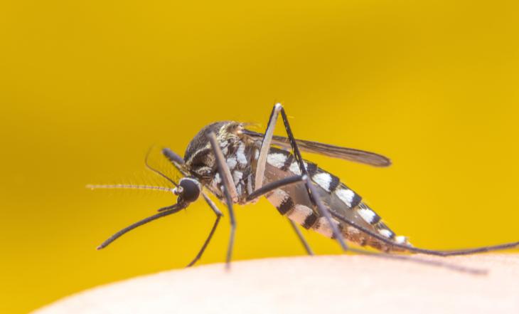 Febre amarela: saiba como afastar esse risco