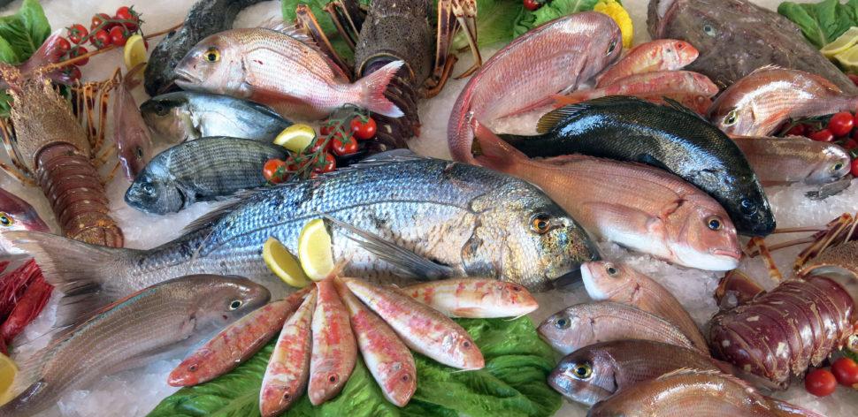Confira as dicas para não errar na hora de comprar o peixe