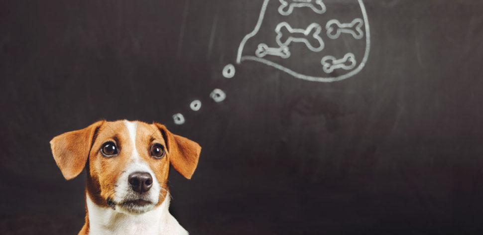 5 perguntas e respostas sobre a alimentação de cães