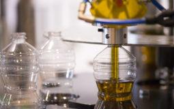 Azeite de oliva: como escolher e quais fraudes são comuns