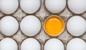 Ovos: como evitar a contaminação por Salmonella?